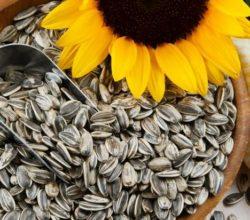 Подсолнечные семечки для мужчин: чем полезны и вредны