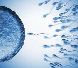 Мужская фертильность: норма, нарушение и как повысить